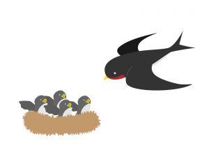 つばめの巣は安全なところに
