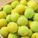 梅を大量消費するなら何作る?家族に喜ばれたものはコレ!